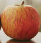 dr. Matjaž Kmecl, boter jablane paplerjev bobovec