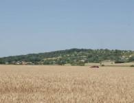 Občina Puconci je boter jablane moščanka (štajerski mošancelj)