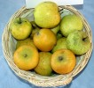 Jablana ananas reneta